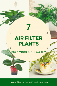 7 Air Filter Plants to keep your air healthy.
