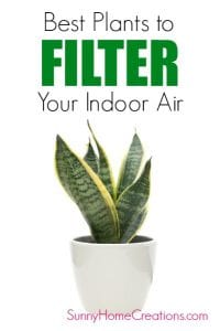 Best plants to filter your indoor air.