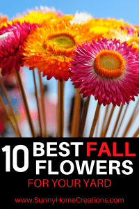 Best Fall Flowers for Your Garden.