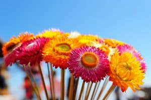 Best flowers for your fall garden
