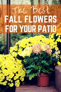 The best fall flowers for your patio